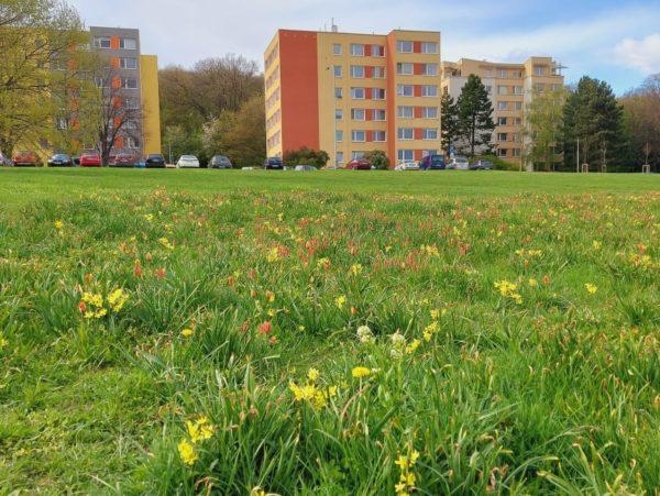 Květinová louka Žernosecká už druhou sezonu dělá radost i užitek. Prostě funguje.